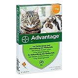 Advantage 40 mg Lösung für kleine Katzen/kleine Zierkaninchen