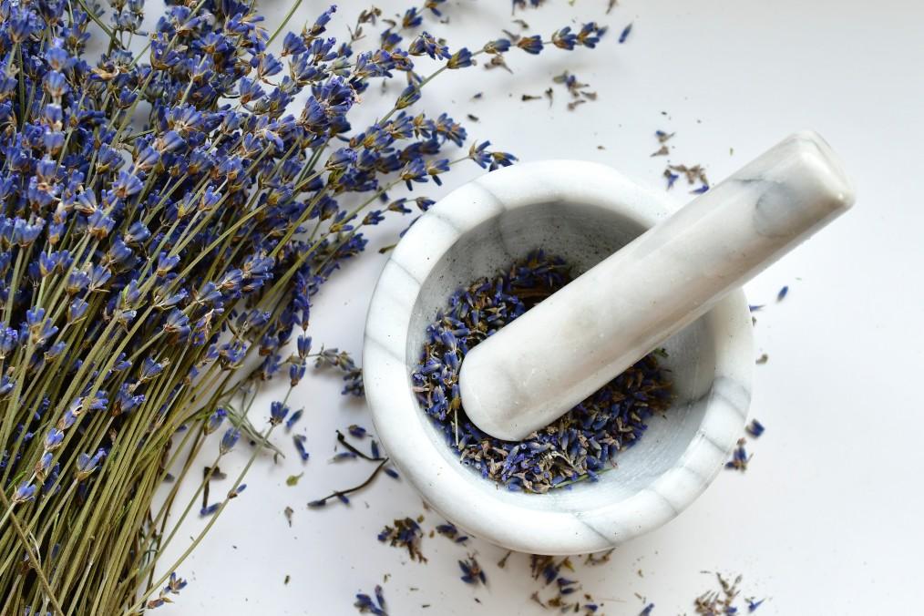 frischer Lavendel