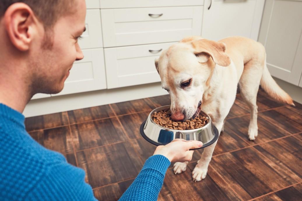In Hundefutter können sich Milben verstecken