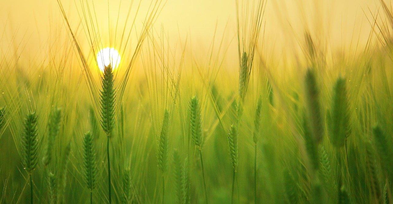 Was tun gegen Erntemilben