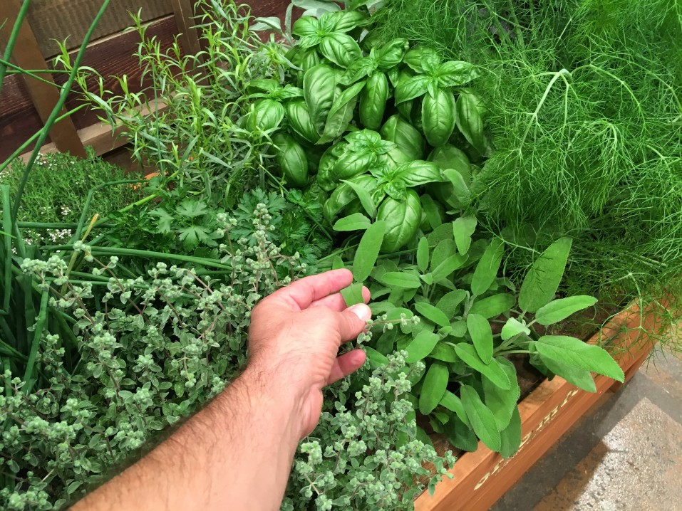 Gemüsebeet ohne Raubmilben