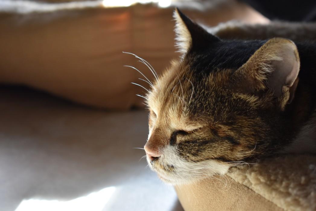 Schlafende Katze nach einem Spot on