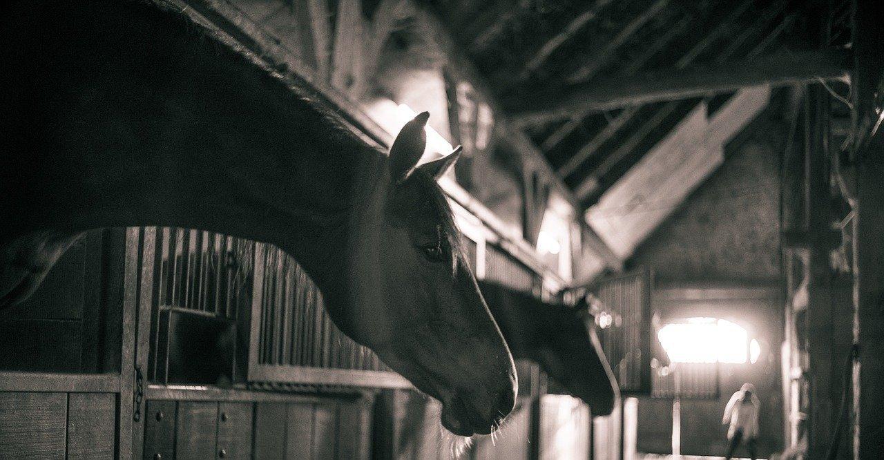 Schwefelbluete gegen Milbenbefall beim Pferd