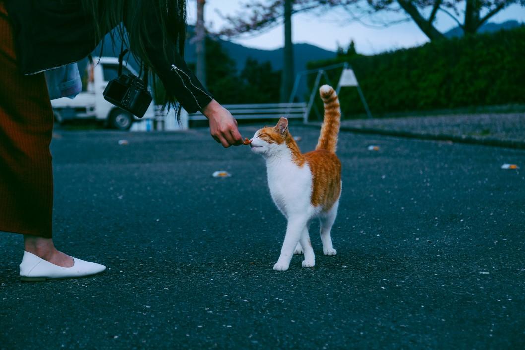 Freigänger Katze mit Zecken