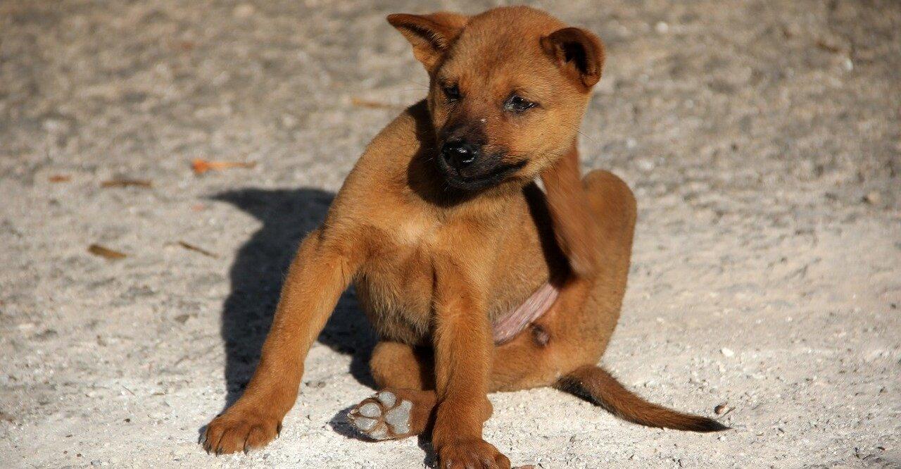Was tun gegen Hundefloehe