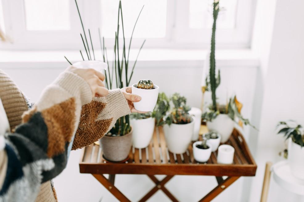 Anti Milbenspray für Pflanzen