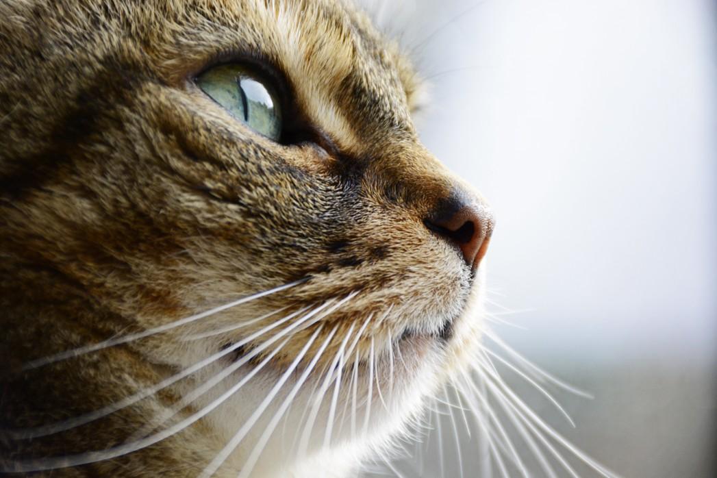 Nahaufnahme Katze